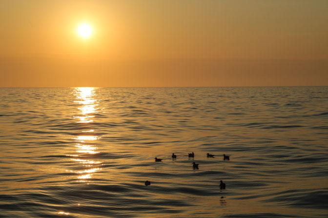 Puffins (oiseaux de mer) au mileiu de la méditerranée, photo Serge Briez, Cap médiations 2014