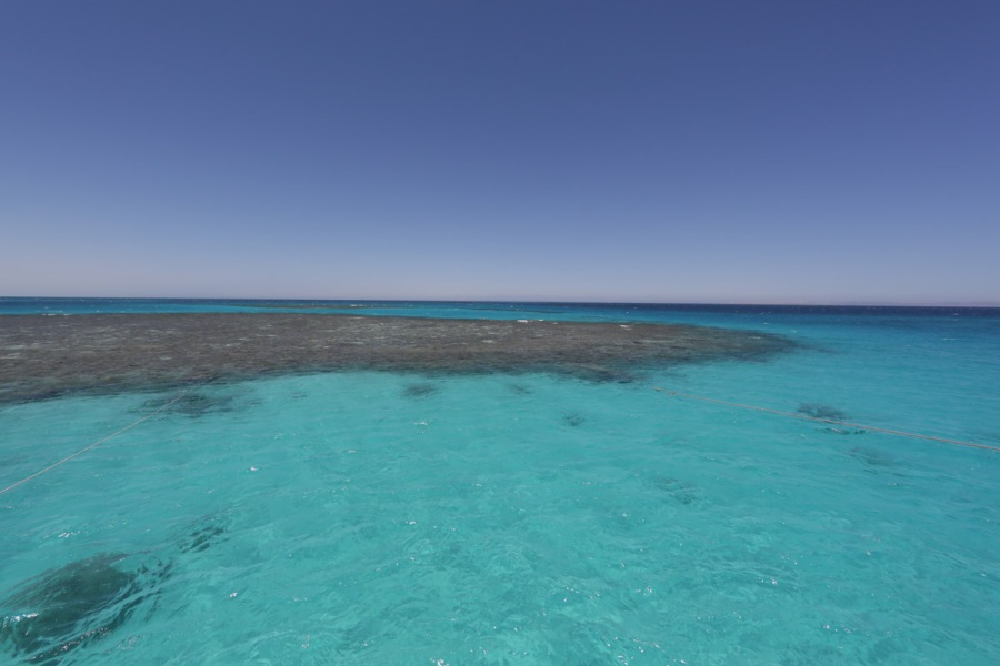 Mer rouge, récif de corail, photo Serge Briez©capmediations.com