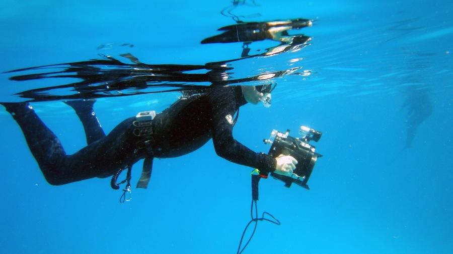 Serge en plongée filmant les dauphins, Photo Agnès Briez Huchon ©capmediations.2015