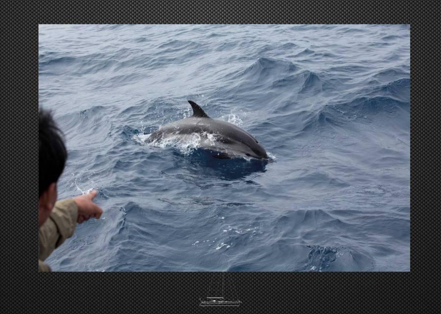 Portfolio Thera explorer, photo de de dauphin en Méditerranée par Serge Briez
